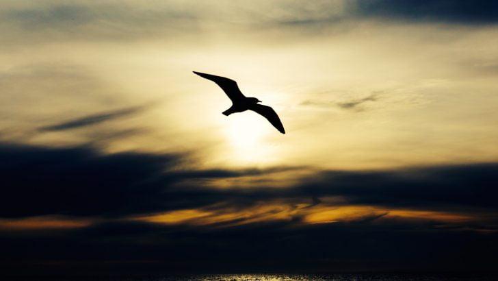 朝空を飛ぶ鳥