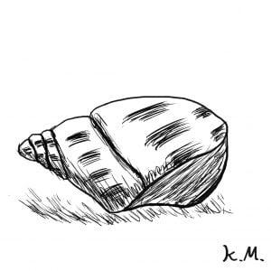 一文物語365 挿絵 貝殻