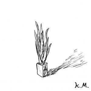 一文物語365 挿絵 観葉植物