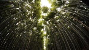竹やぶの空の道