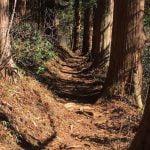 奥多摩御岳山御嶽神社奥の院への道