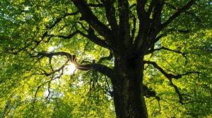 大きな木を見上げて撮られた写真