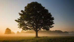 草原に生えた大きな一本の木