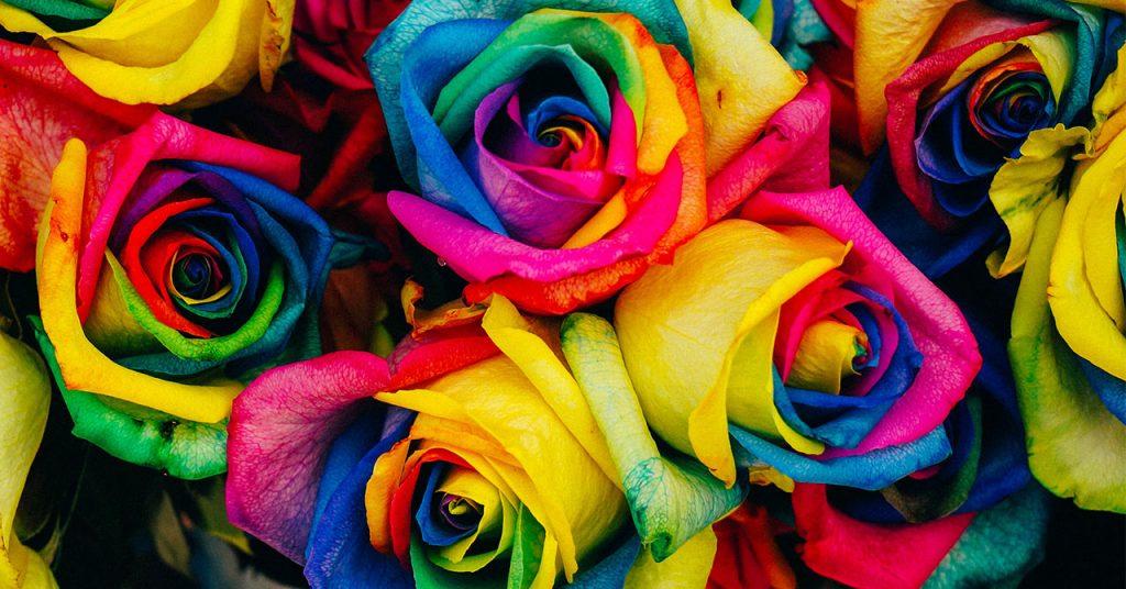 カラフルのバラの花